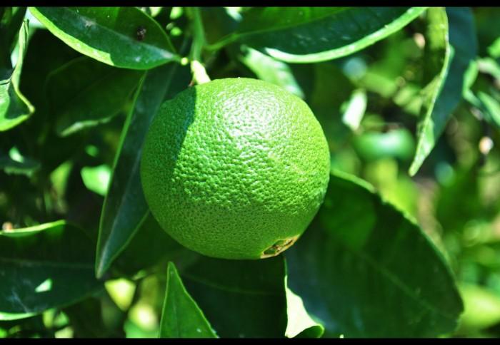 I frutti di aranciAmato