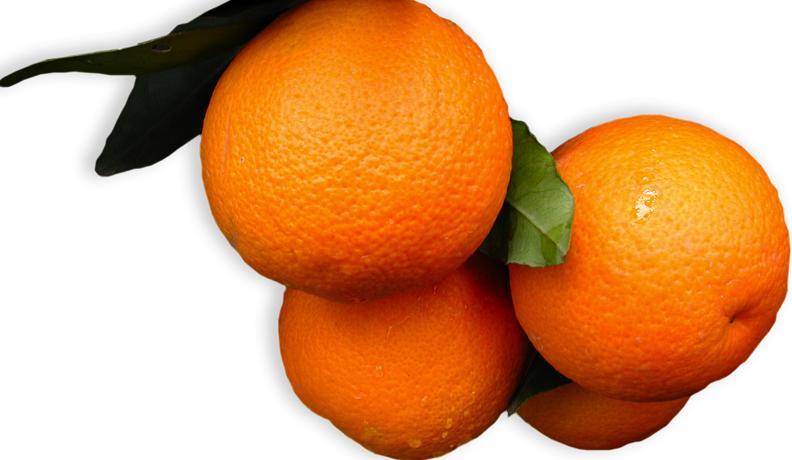 La arancia Vaniglia Apireno di Ribera, questa sconosciuta