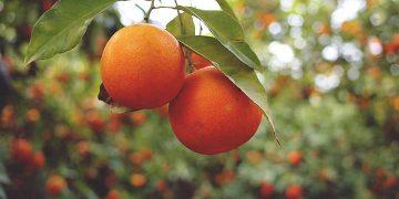 arance-sicilia
